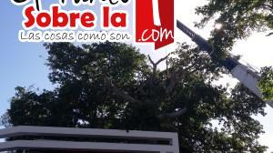 ceiba (3)