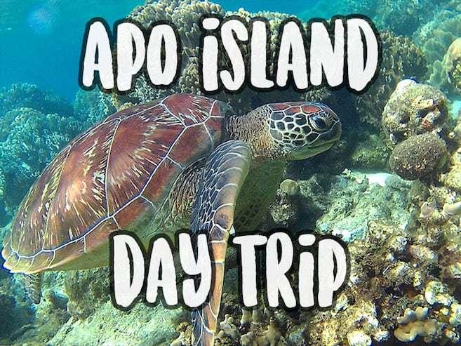 Apo Island Day Trip - Snorkeling with sea turtles