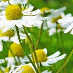 3 remedios naturales para controlar el estrés