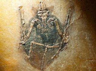 Fósil en Virgina Tech