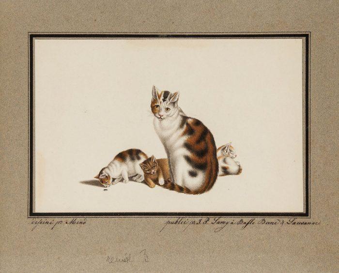 dibujos gatos