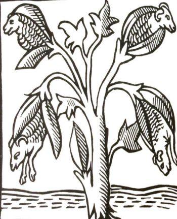 planta oveja