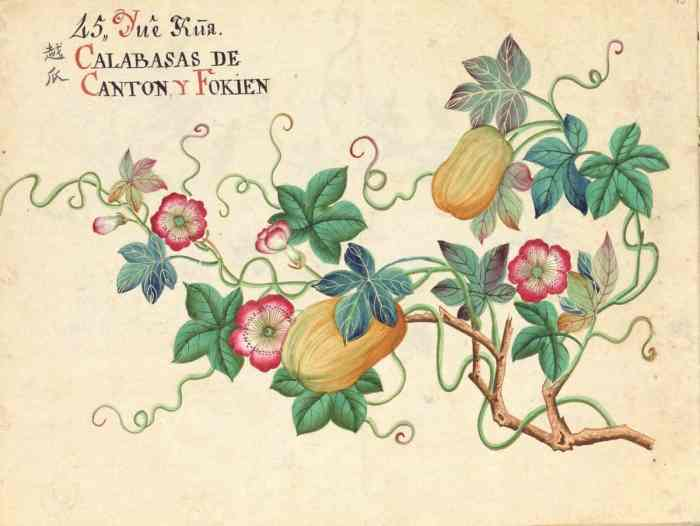 Calabasas (sic) de Cantón y Fokien (Fujián). Comisión de Juan de Cuéllar en Filipinas | Archivo RJB-CSIC