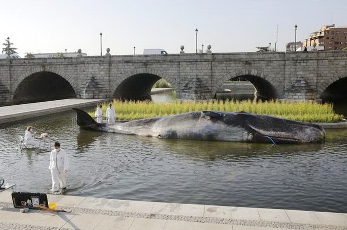 Aparece una 'ballena' en el río Manzanares