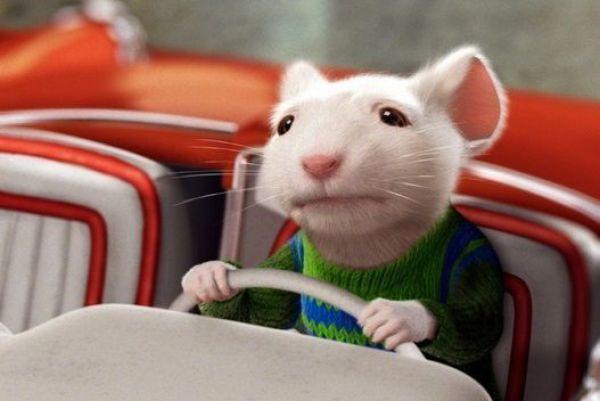 Las 10 MEJORES películas sobre RATAS - Stuart Little