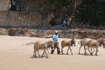 Donkeys on the beach...