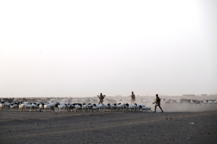 Shepherds and their goats looking for water