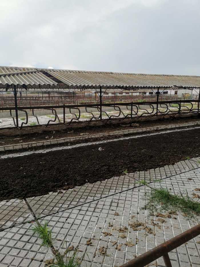Granja de puercos en Lagos de Moreno