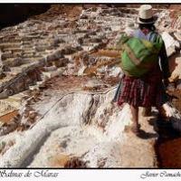 Cosechas de la sal vedada