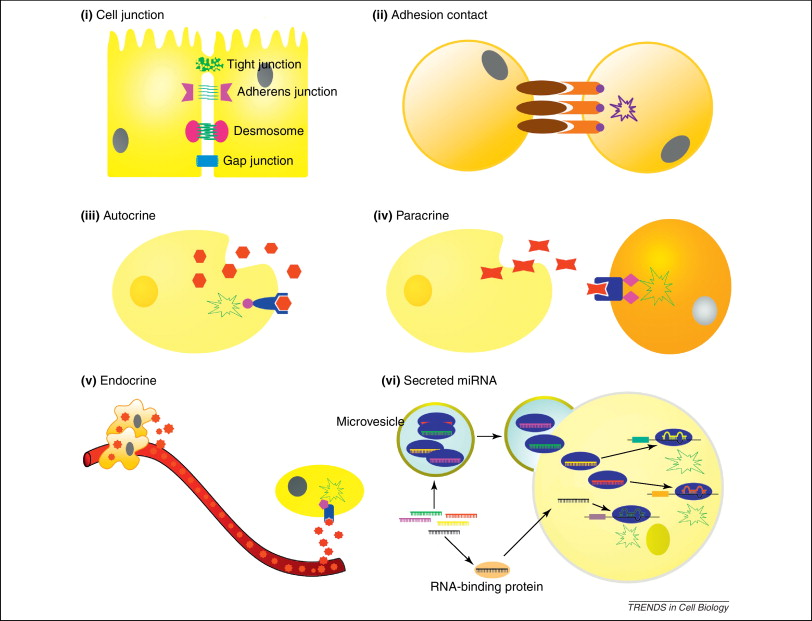 Secreted microRNAs: a new form of intercellular communication: Trends in  Cell Biology