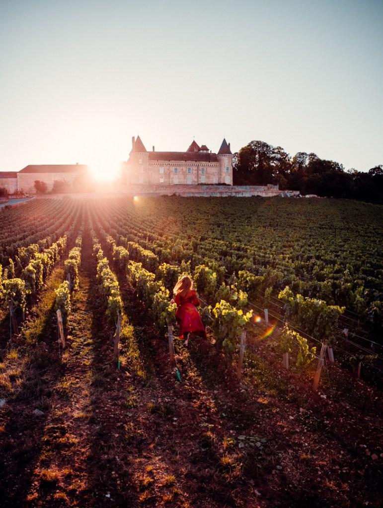 vignes-bourgogne