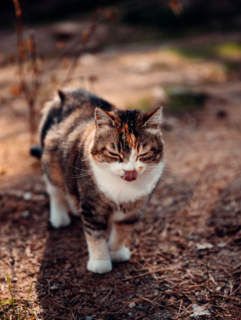 petit-chat-dans-parc-du-gevaudan
