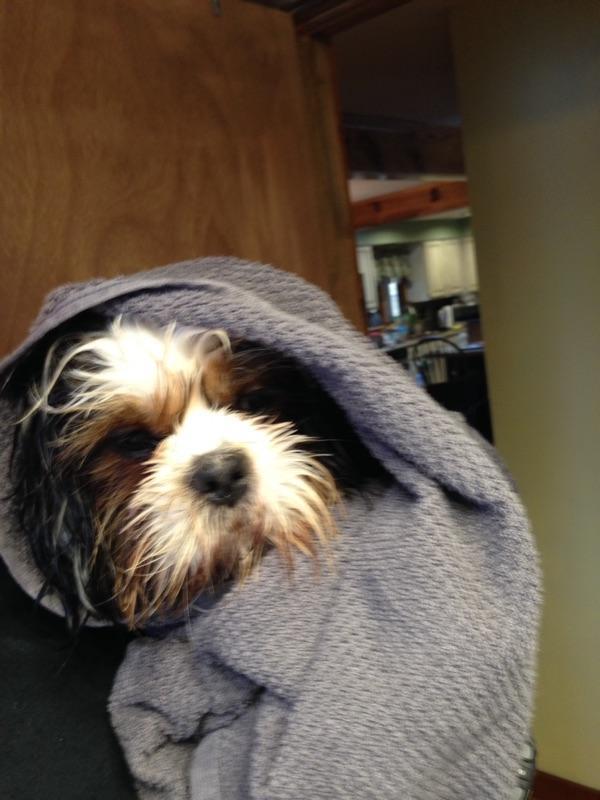 Mondays With Murphy- Bath Time
