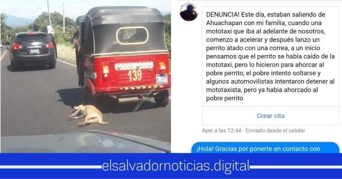 Ministerio de Medio Ambiente atiende el llamado al asesinato de un perro