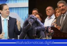 Federico Anliker asegura que mejor los chimpancé harían mejor el trabajo de algunos diputados de la Asamblea
