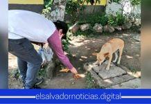 Personal del Gobierno que entregan paquetes alimentarios, regalan comida a perritos en Sonsonate
