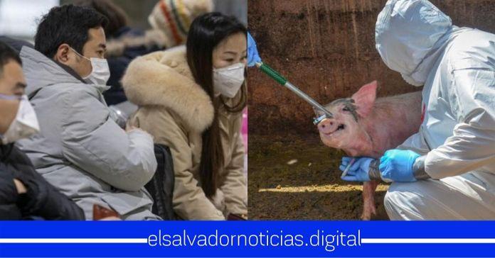 Descubren nueva gripe porcina con