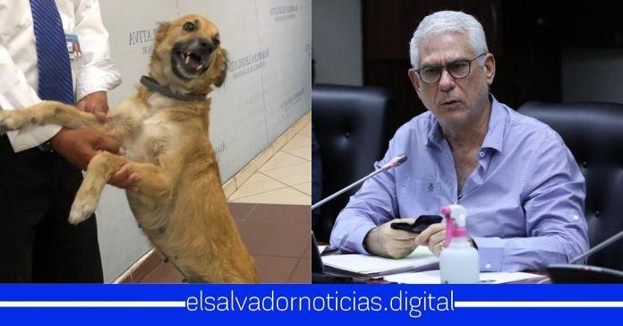 Salvadoreños afirman que se sienten más representados por el Diputado Canelo que por el corruptazo de Rodolfo Parker