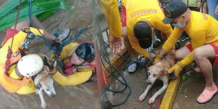 Bomberos en Honduras rescatan a perrito que se había caído al río tras fuerte paso del huracán ETA