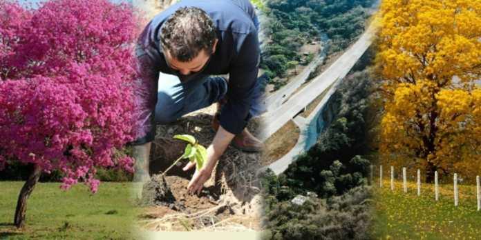 Gobierno continúa plantación de un millón de árboles cortés blanco y maquilishuat en Bypass de La Libertad