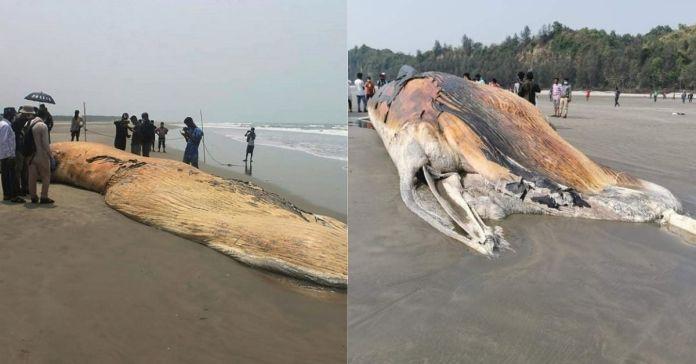 Encuentran cadáveres de dos ballenas encallados en una playa de Bangladés