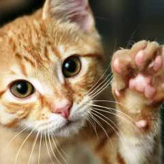 Feliway - nuevo gatito en casa