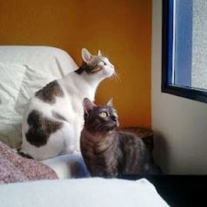 Noa y Uli, los gatos de Arantxa
