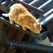 gatos alturas2