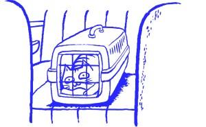 Gato en transportin - Feliway