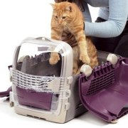 A mi gato no le gusta viajar en coche-Feliway