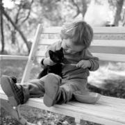Gatos y bebes-Feliway