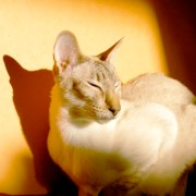 Los gatos duermen al sol-Feliway
