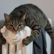 Los gatos y el frio-Feliway