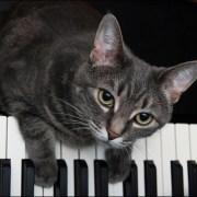 Los gatos y la música-Feliway