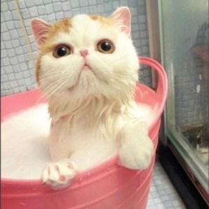 gatito en bañera rosa