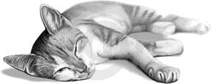 gato durmiendo dibujo