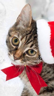 gato navidad1