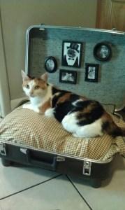 Nos mudamos de casa a piso. Cómo habituar a nuestro gato