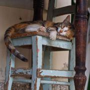 Gatos en casa - Feliway para mudanzas y adopciones