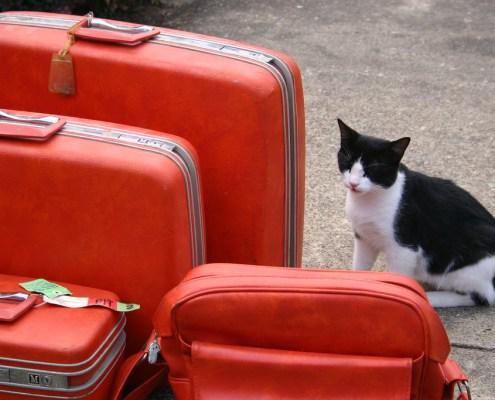 Los viajes con gatos y Feliway