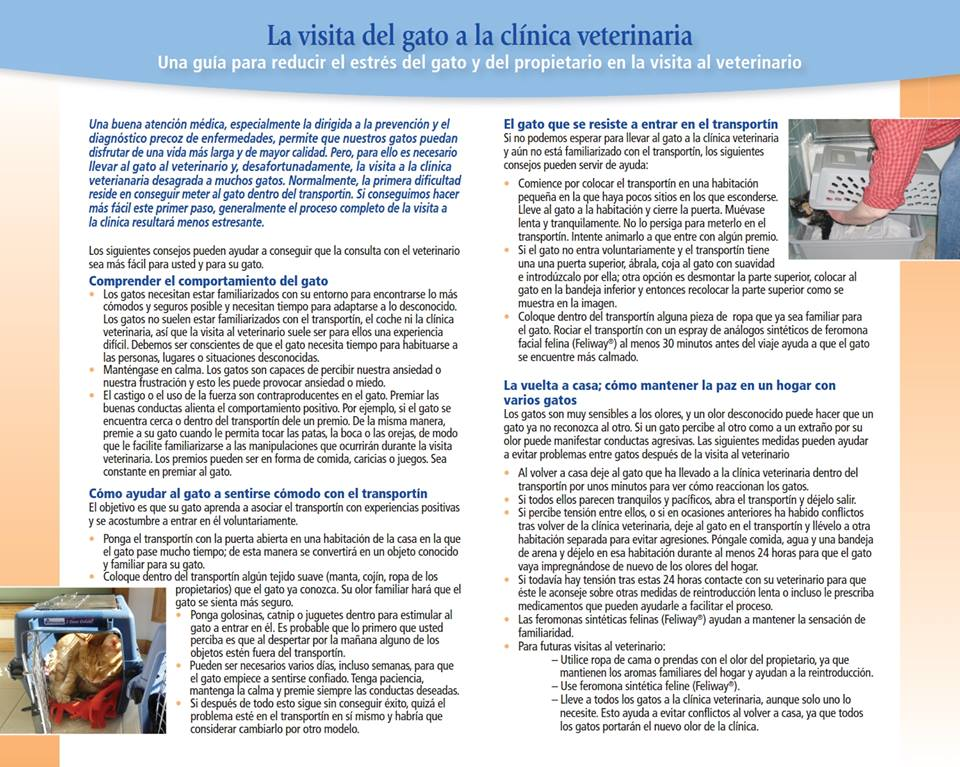 GEMFE Visita al veterinario 02