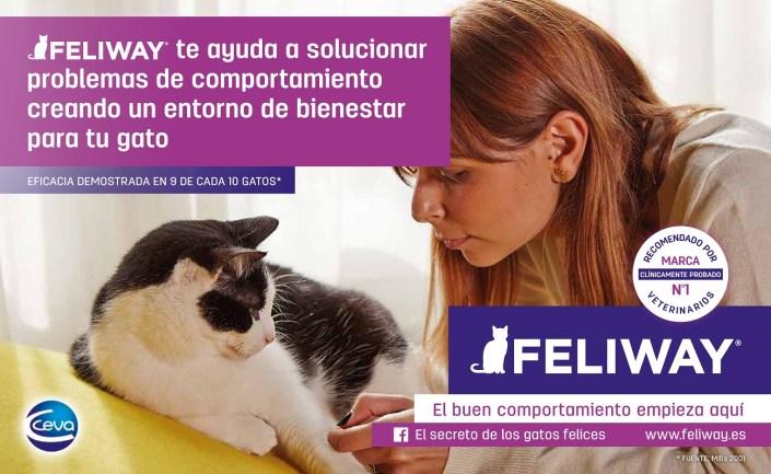 Poniendo Feliway, estamos comunicándonos con nuestro gato en un lenguaje que entiende perfectamente