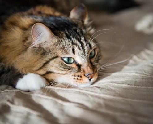 Nuestros gatos son cazadores, son animales activos… así que ¡NO permitamos que se aburran en casa!
