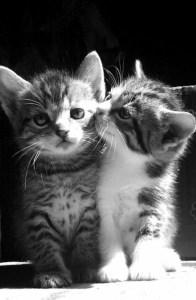 gatitos criados juntos