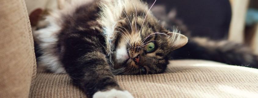 ¿Sabes por qué los gatos marcan con arañazos?