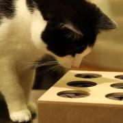 Cómo hacer juguetes caseros interactivos para gatos