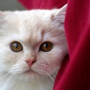Entender el lenguaje corporal de los gatos