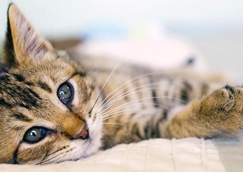 Casas adaptadas para gatos - DIY