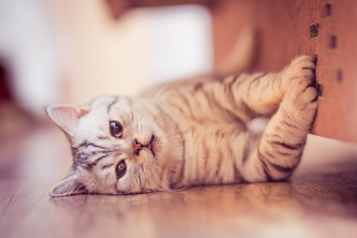¿Qué hago si mi gato se porta mal?