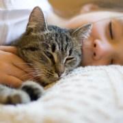 ¿Sabes identificar el comportamiento de tu gato?